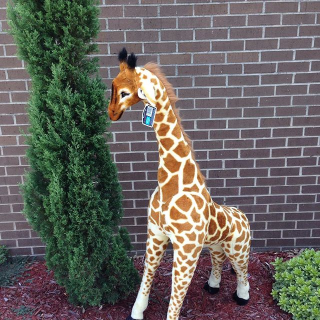 """Stretch"" needs a new home! He measures 52"" tall, brand new with tags from Melissa & Doug and completely housebroken!#refinerykids #melissaanddoug #batonrouge #225"